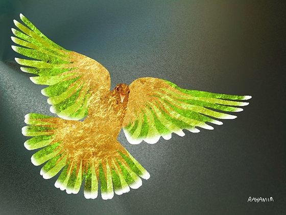 Dove wings - כנפי יונה