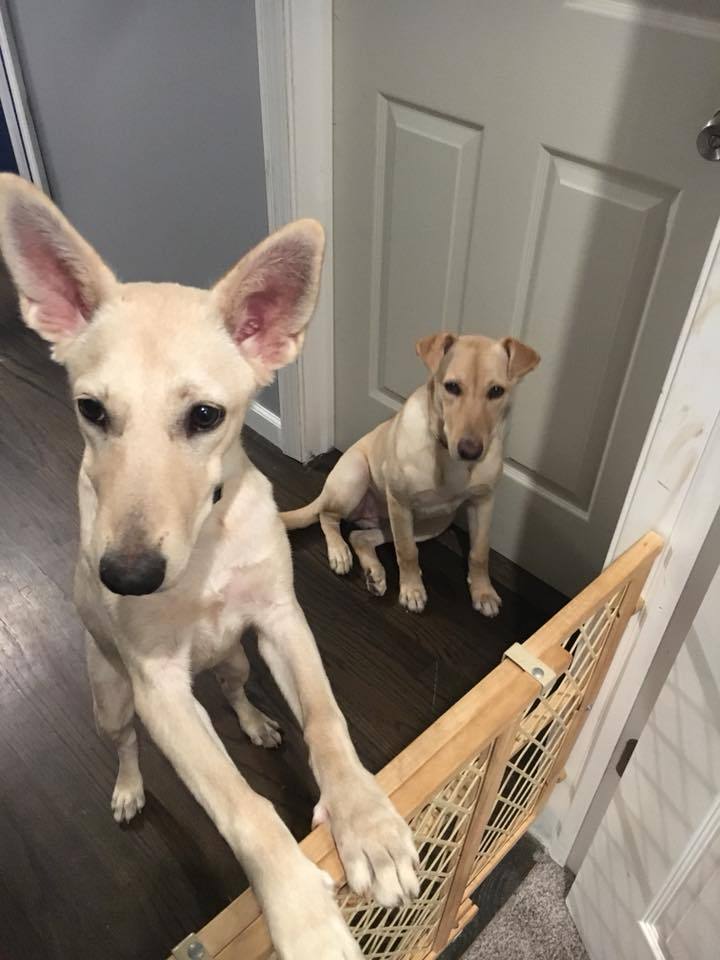 Golide & Fawn