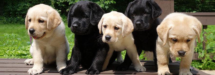 Puppies REV3.jpg