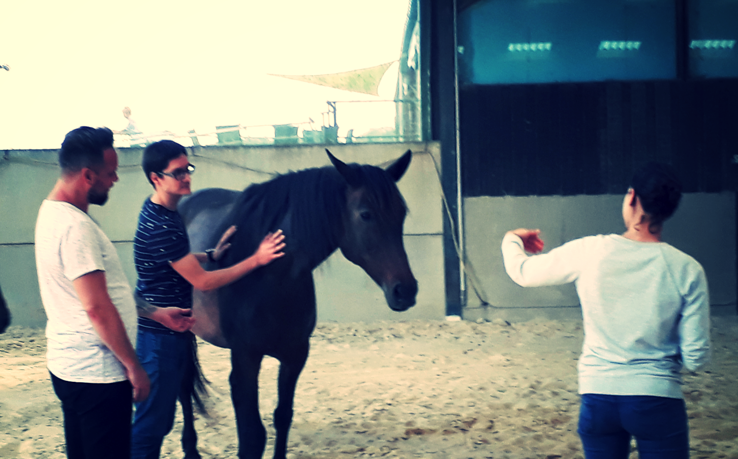 equi-coaching chevalessence