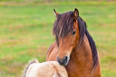 Brown-horse-796478.jpg