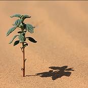 agape plant.png