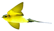 lemon%20yellow%20bird%20png_edited.png