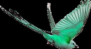 PREEN GREEN BIRD TRANS.png