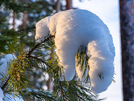 Январская сказка. Мороз