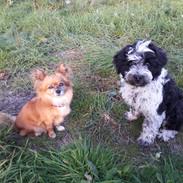 Leo und Lulu Welpenbild.jpg