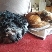Leo und Lulu.jpg