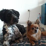 Leo und Lulu Decke.jpeg