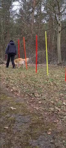 Was muss so ein Junghund können?