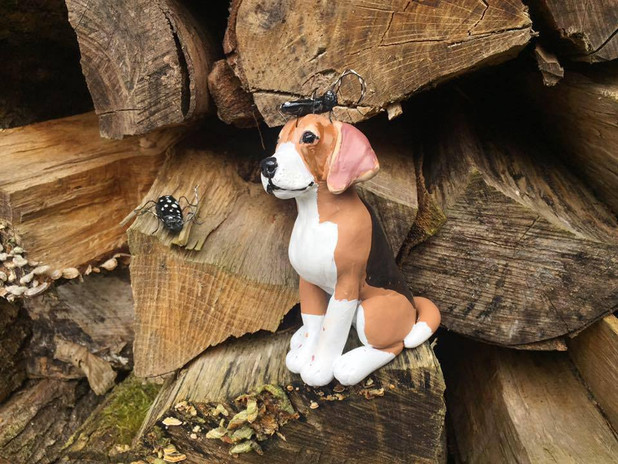 Beagle mit Käfern