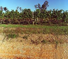 grand vin de bordeaux, merlot, cabernet sauvignon, médaille d'or, grand cru, lavagnac, cabernet franc, grand vin, vin rouge, chateau, terroir, vinexpo,