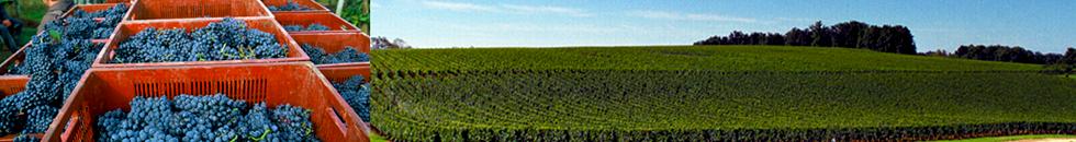 chateau haut piquat lussac saint emilion grand vin bordeaux
