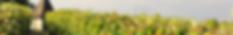 Maison Rivière est le spécialiste des Crus Classés de Bordeaux : des appellations prestigieuses telles que Margaux, Pauillac, Saint Estèphe, Saint-Julien, Médoc, Pomerol, Saint Emilion, Sauternes, Pessac Léognan ou autre Château Lafite, Margaux, Pétrus