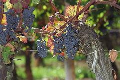 Le Classement des Vins de Bordeaux