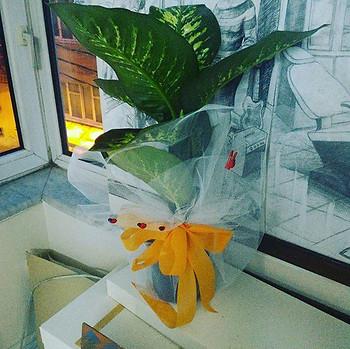Çiçeğimiz geldi teşekkürler gümüşvetaşev