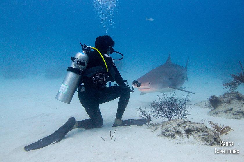 Kieran & Tiger Shark 3 by Chema.jpg