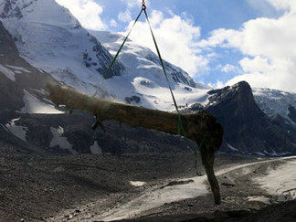 Pasterze gibt eine 6.000 Jahre alte Zirbe frei
