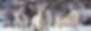 Screen Shot 2019-05-17 at 2.01.55 PM.png
