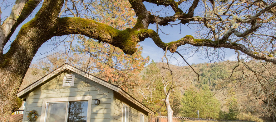 The Hut and Oak