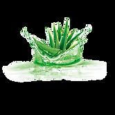 aloe-vera-plant-gel-png-favpng-h55hvtErv
