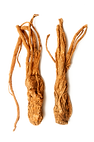 angelica sinensis.png