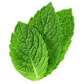 png-transparent-mentha-spicata-peppermin