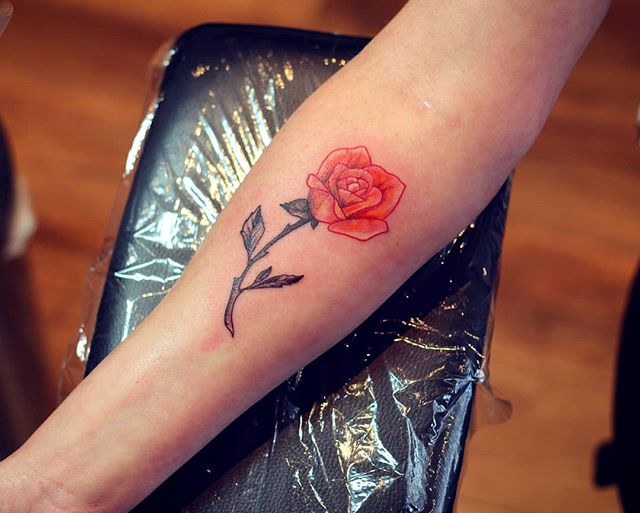 Coral rose #tattoo #tatouage #rosetattoo