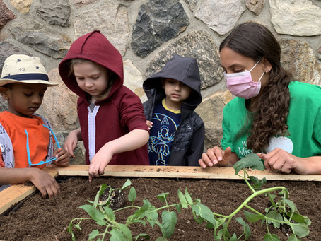 Jardins solidaires / Solidarity Gardens