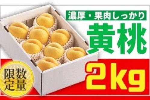 FY19-670 ★山形黄桃★黄桃 秀品2kg かため