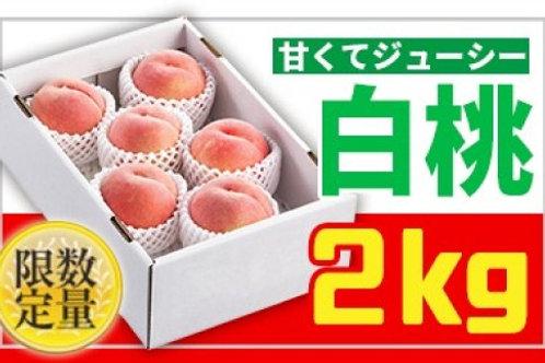 FY19-667 ★フルーツ王国山形★白桃秀品2kg かため系品種