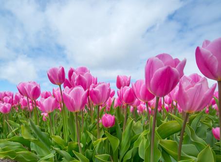 An Unusual Spring
