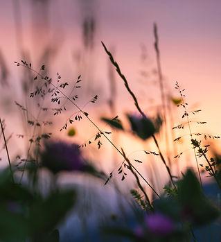 pexels-vh-s-weeds.jpg