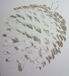 אצטרובל לבן  |  White pinecone