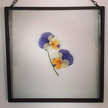 פרחים מיובשים במסגרת - אמנון ותמר