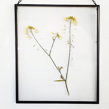פרחים בתוך מסגרת