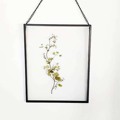 פרחי בר מיובשים בתוך מסגרת