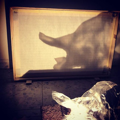 Photographing a plastic bag and casting its shadow on a screen | צילום שקית ניילון והטלת הצל שלה על מסך