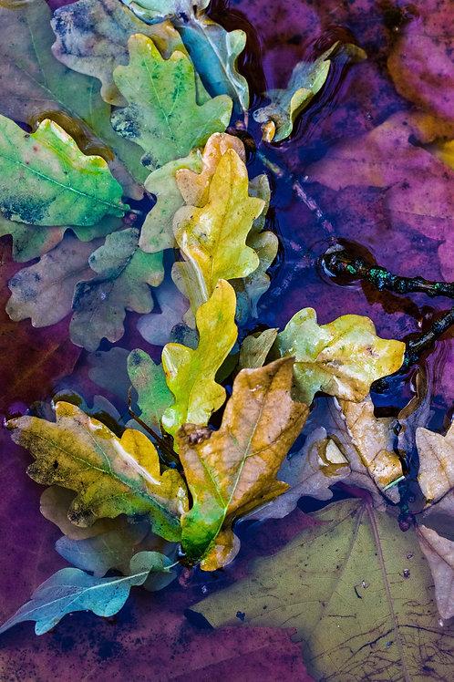 Blader i vann III, høstfarger