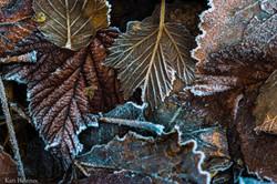 Første frostnatt