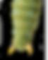 Caterpillar tail.png