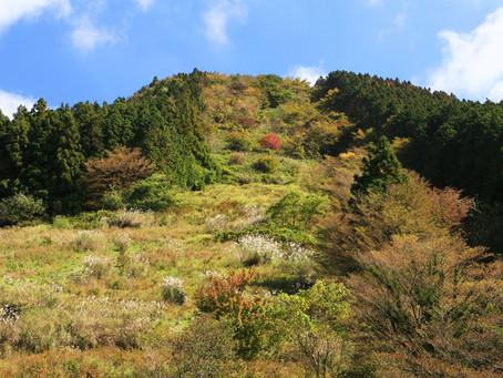 林道を歩いて歩いて 雷山(2020年10月24日)