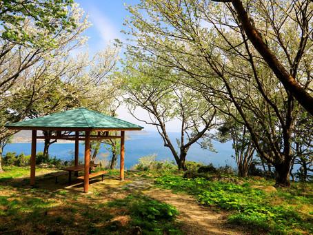 佐賀県 超低山 大島山(2021年3月27日)