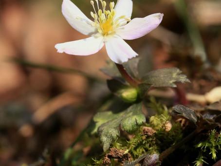 井原山のお花たちは。。。♫(2021年2月28日)