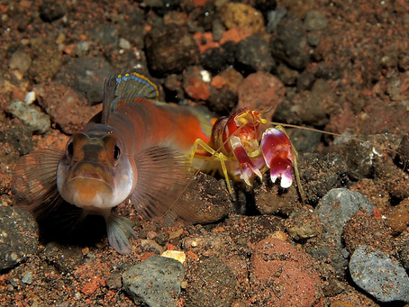 What If This Shrimp Isn't a Shrimp!