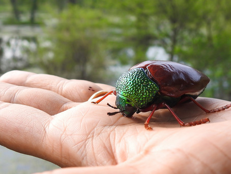 What if You Eat More Insects?