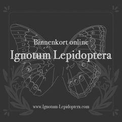 Ignotum Lepidoptera
