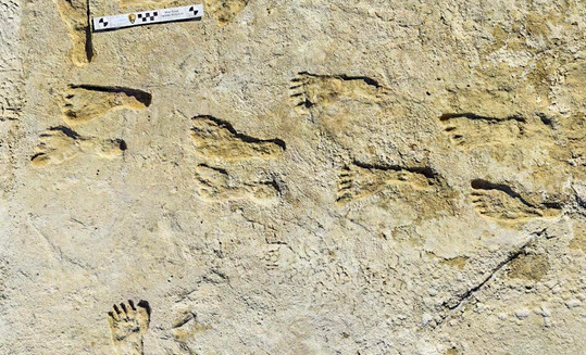 Oldest Known Human Footprints Found in New Mexico