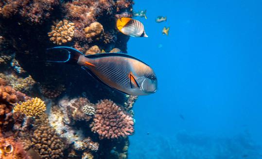 3D Printing to Help Restore Hong Kong's Coral Reefs