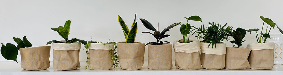 Bayside Melbourne Plants Gifts and Homewares