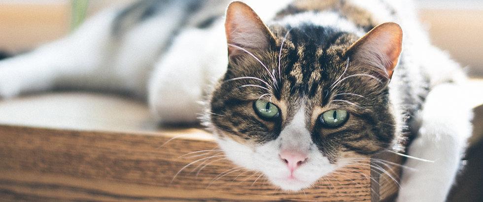 Pet Hospice And Palliative Care Melbourne